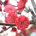 札幌の平岡梅林公園に吉方位で行く!